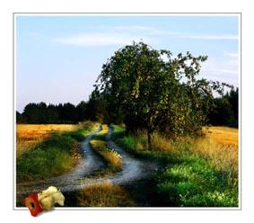 GE GE GE: Ett äppelträd, som ger så mycket frukt, att marken runtomkring är alldeles översållad. Äppelskruttet visar att åtminstone nån har tagit för sej av överflödet. Foto: Per Johansson